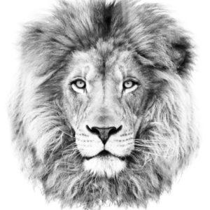 Roar by Dorian Popa Flash Tattoos Romania Tatuaj temporar
